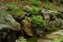 Millstone-Wildflowers-No_93.jpg