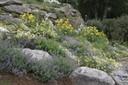 Rocks-and-flowers-67.jpg