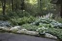 Hostas, ferns and pachysandra
